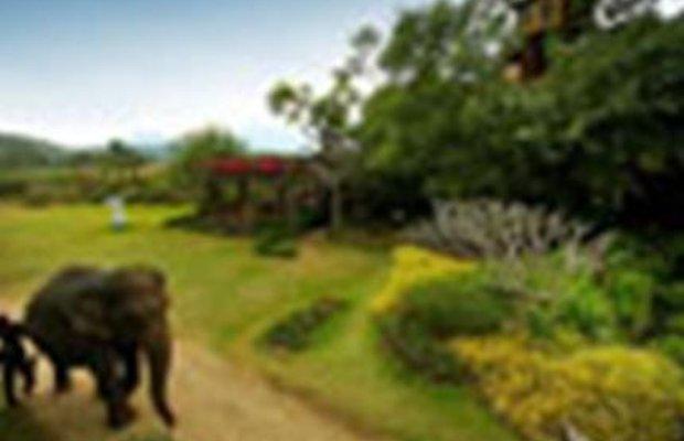 фото Pai Treehouse Resort 111830495