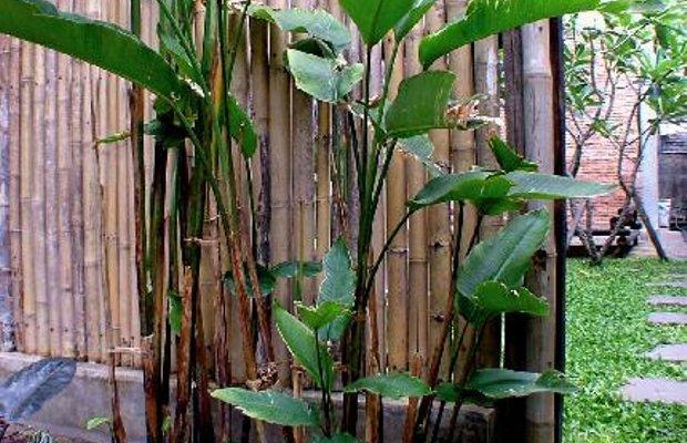 фото Chiang Maan Residence 111846876