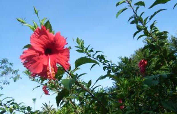 фото The Samui Native Resort 111876671