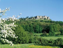 Pets-friendly hotels in Bad Staffelstein