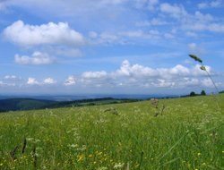 Pets-friendly hotels in Masserberg