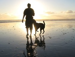 Pets-friendly hotels in Carlsbad