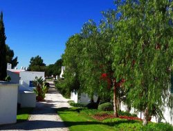 Pets-friendly hotels in Alvor