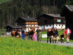 Hollersbach hotels with restaurants