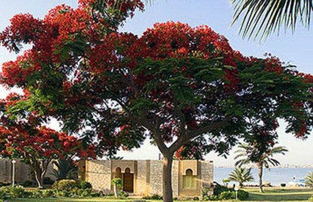 фото Mercure Ismailia Forsan Island 612228200