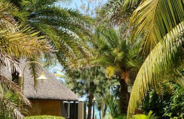 фото Bougainville 613003081