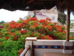 Top-8 romantic Todos Santos hotels