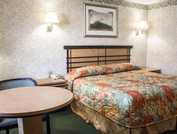 Pets-friendly hotels in Colonie