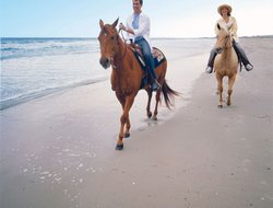 Pets-friendly hotels in Amelia Island