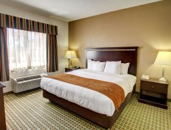Pets-friendly hotels in Burleson