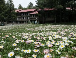 Pahalgam hotels with swimming pool