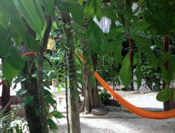 Pets-friendly hotels in Playa Del Carmen