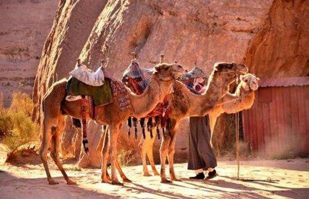 фото Bedouin Directions 668177983