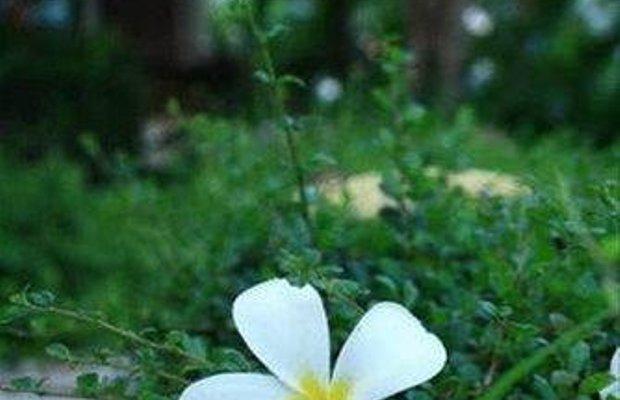 фото Baanmai Kon Muang 668178353