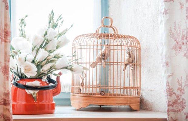 фото Bird Cage 677324373