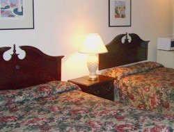 Pets-friendly hotels in Newport News