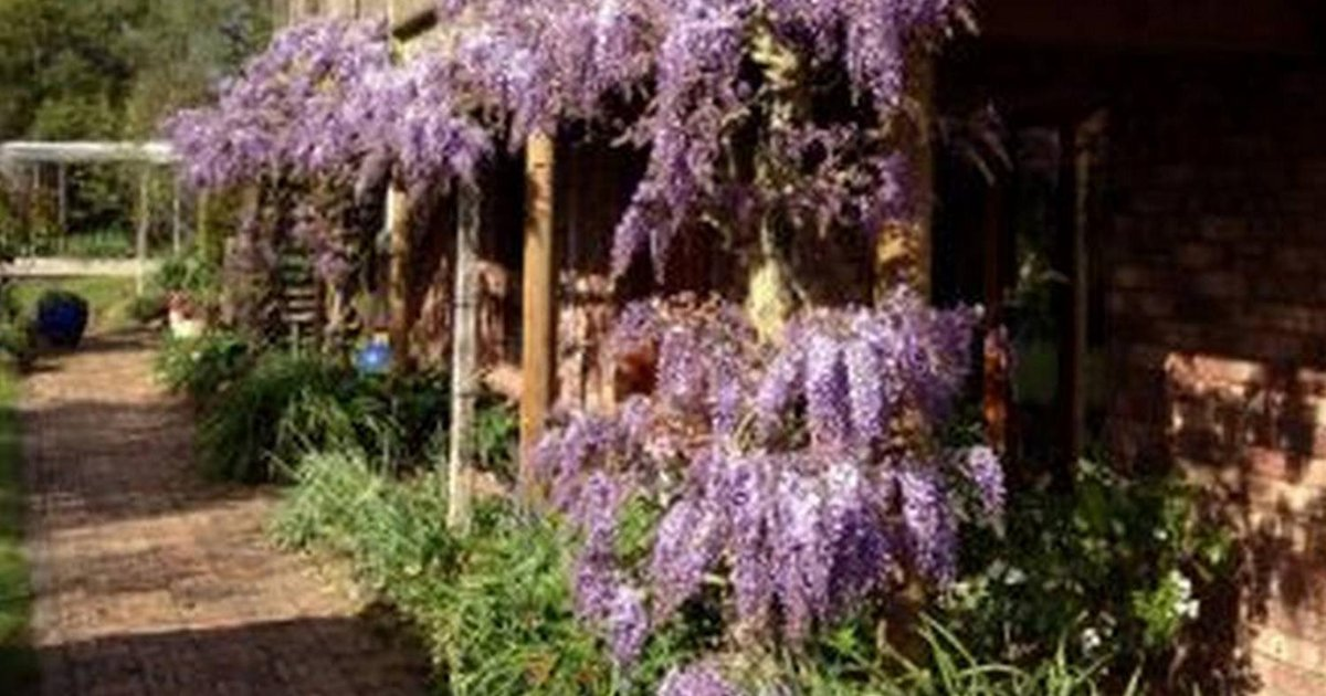 Wisteria Lodge