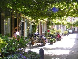 Pets-friendly hotels in Haarlem