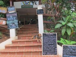 Pets-friendly hotels in Los Chacarenos