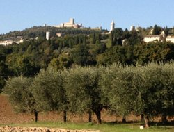 Pets-friendly hotels in Assisi