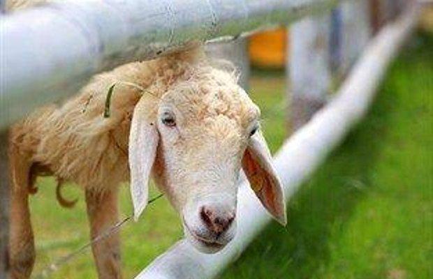 фото The Memories Hotel Koh Samui Lamai with Sheep Farm 769707941