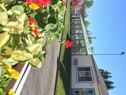 Pets-friendly hotels in Mackinaw City