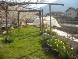 Pets-friendly hotels in Pergine