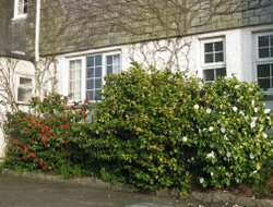 Pets-friendly hotels in Falmouth