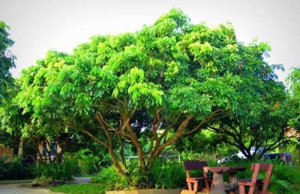 фото Bansuan Thanormpat Resort 810725331