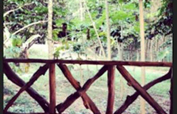 фото Wild Banana 828376660