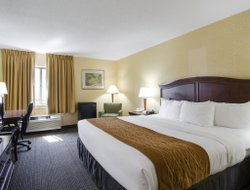 Pets-friendly hotels in Harrisonburg