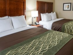 Pets-friendly hotels in Rochester