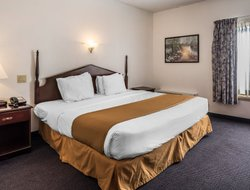 Pets-friendly hotels in Latham