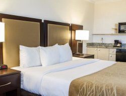 Pets-friendly hotels in Deerfield Beach