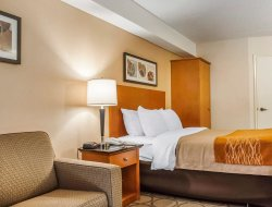 Pets-friendly hotels in Newmarket