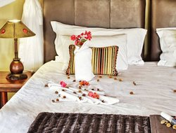 Pets-friendly hotels in South Africa
