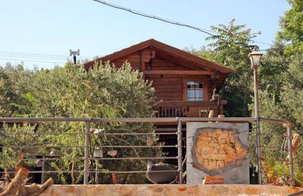фото Olive Tree Shade 840967033