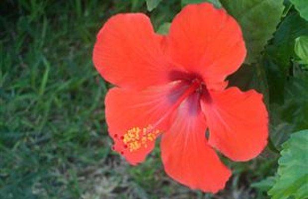 фото Les Orchidées Complex Apartment 94340368