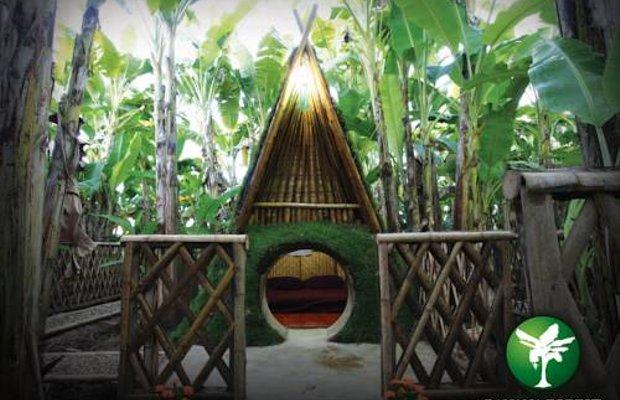 фото Banana Forest Chiang Mai Homestay 969150451