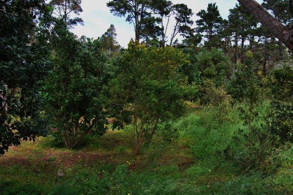 Apartamento Rural Santa Cristina - фото 20