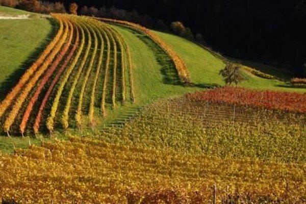 Paderlafoderhof - фото 16