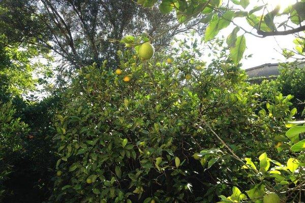 Il Giardino Di Silvia - 11