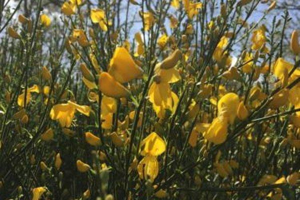 Apartamentos y Casas Victor - фото 18