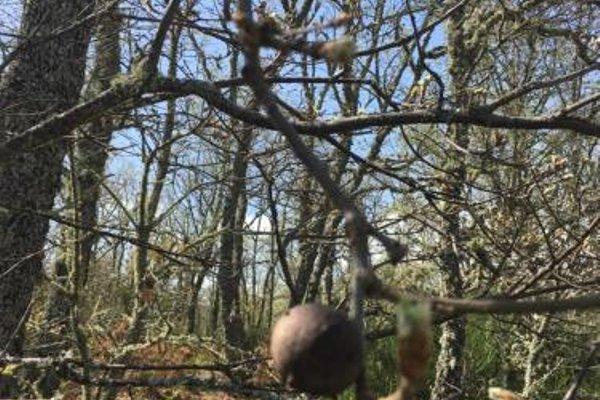 Apartamentos y Casas Victor - фото 19