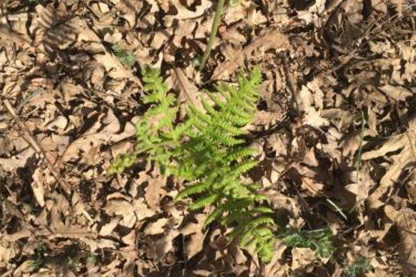 Apartamentos y Casas Victor - фото 21