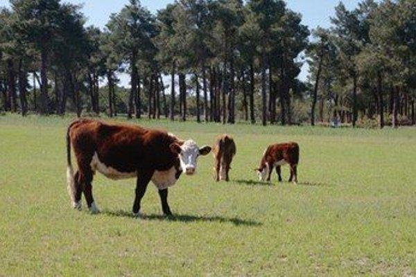 Hotel Rural Montalvo Centro Ecuestre - фото 12