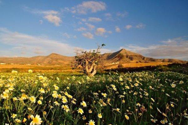 El Aceitun Holiday Homes Canarias - 18