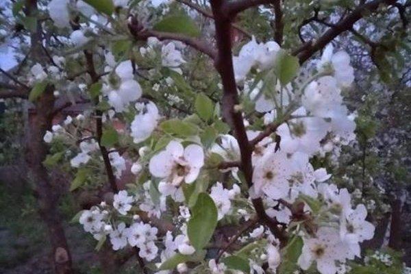 Агроусадьба «Ельница» - фото 20