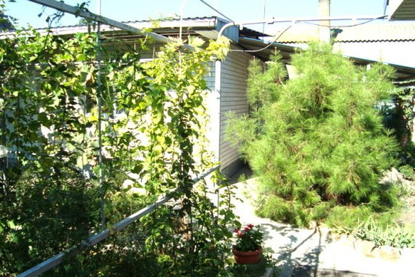 Гостевой дом На Кропоткина - фото 16