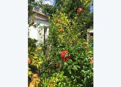 Аист фото 2 - Малореченское, Крым